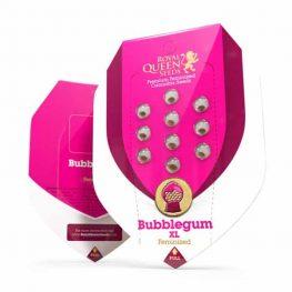 bubblegum wietzaden
