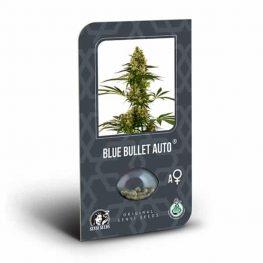 blue bullet autoflowering.jpg