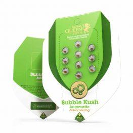 bubble kush automatic cannabis zaden
