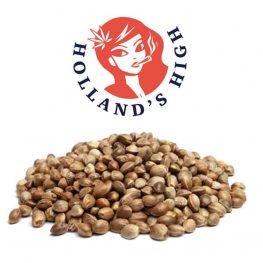 bulk seeds.jpg