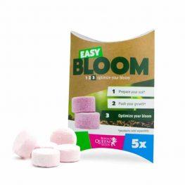 easy bloom.jpg